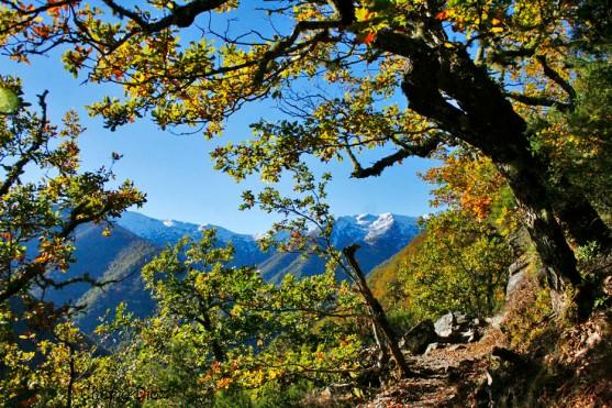 Bosque de Muniellos en noviembre
