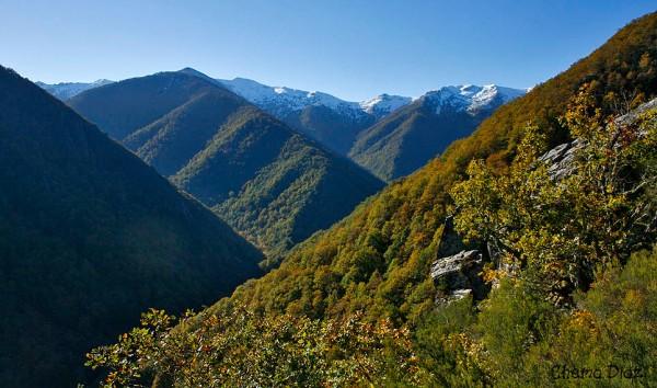 Bosque de Muniellos, en otoño.