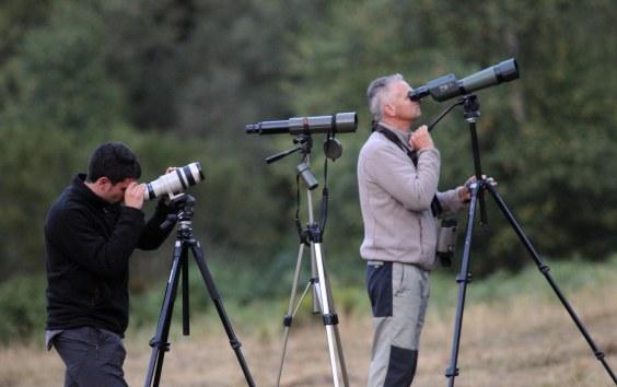 Salidas de observación de fauna durante el otoño del 2013.
