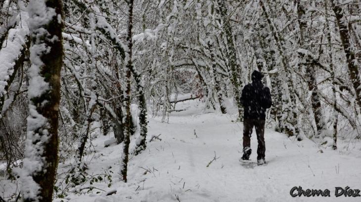 Disfrutando de los bosques en invierno
