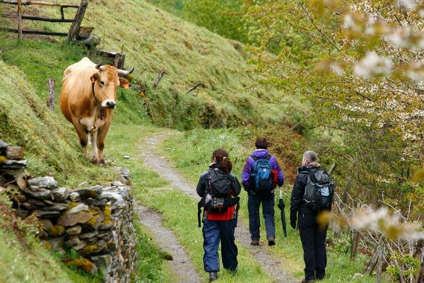Oso y ganadería, un tema muy recurrente en nuestras actividades