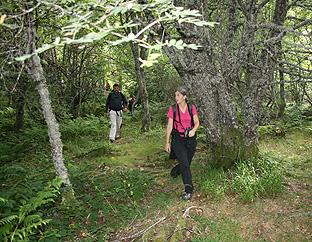 Rutas de montaña por los bosques del alto Narcea